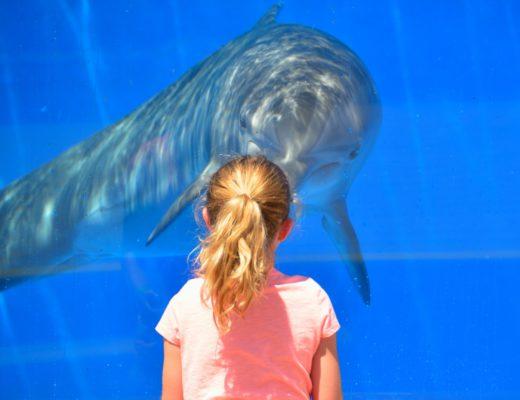 Emilie et le dauphin 14