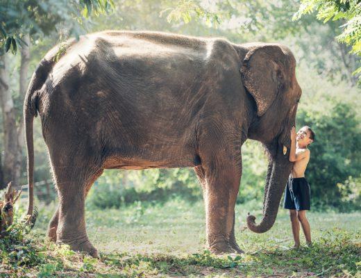 Enfant éléphant